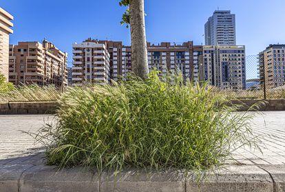 Una imagen de Valencia. Alcorques con vegetación para favorecer la polinización de abejas en los aledaños de la Avenida de Baleares.