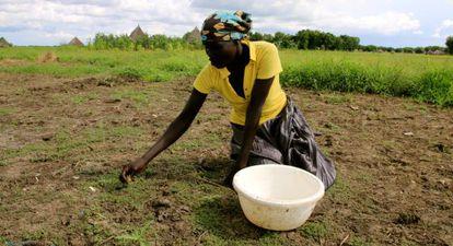 Nyakaka recoge hierbas cerca de su aldea para hervirlas y comerlas, acompañadas de unas bolitas de sangre de vaca.