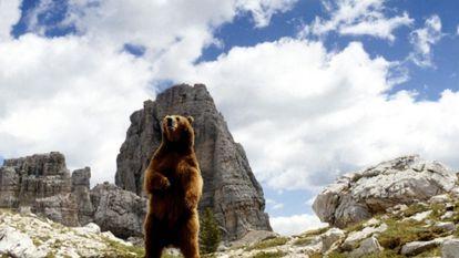 Un fotograma de la película 'El oso', de Jean Jacques Annaud.