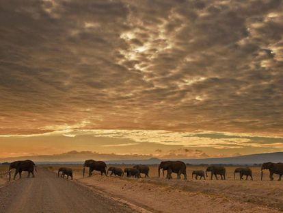 Un grupo de elefantes en el Parque Nacional Amboseli, en Kenia.