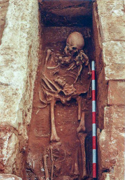 Esqueleto de un cristiano enterrado en Cercadilla que vivió durante el emirato (756-929)  y que recibió un gran hachazo en la cabeza.