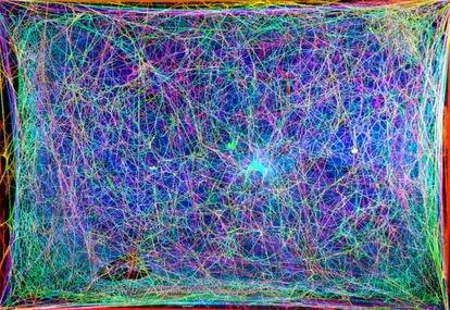 Corte transversal de una tela de araña, de donde se extrae un mapa tridimensional que luego se transforma en música.