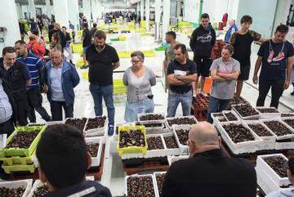 Varios compradores observan el género en la lonja de la ciudad gallega a las seis de la mañana.