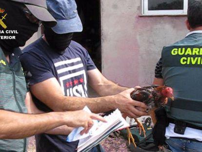 Agentes de la Guardia Civil, con uno de los gallos de pelea intervenidos.