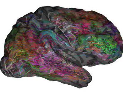 Un estudio demuestra que las palabras similares activan las mismas áreas cerebrales y que el lenguaje no solo es cosa del lado izquierdo del cerebro