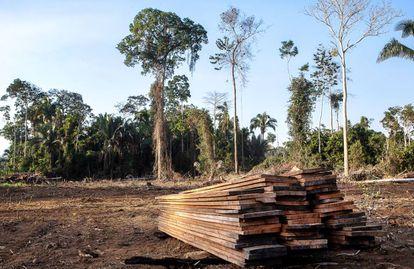Tablones de madera conseguidos en una tala ilegal en la zona protegida.