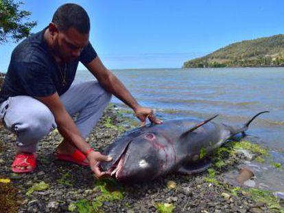 Un pescador graba los intentos desesperados de un ejemplar de cetáceo por sacar a su hijo de una zona de aguas contaminadas en islas Mauricio