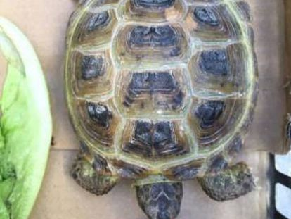 Facebook. 'Tortu', la tortuga pérdida.