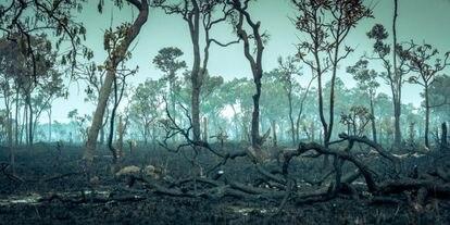 Un área quemada de la selva tropical del Amazonas.