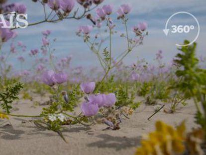 Las inusuales lluvias disparan el florecimiento de más de 200 especies nativas de plantas