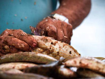 Un hombre limpia pescado en Fuerteventura (Canarias).