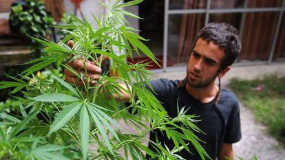 Un hombre trabaja en sus plantas en su casa en Montevideo