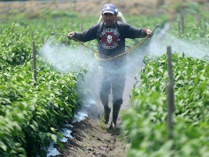 Un jornalero fumiga una cosecha en Tanhuato, Michoacán.