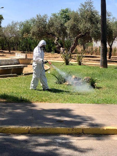 Tareas de fumigación en Almensilla (Sevilla).