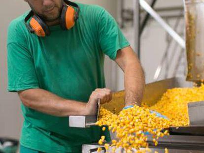 Un operario controla el flujo de maíz cocido en la fábrica de Super-Mex en El Puerto de Santa María (Cádiz).