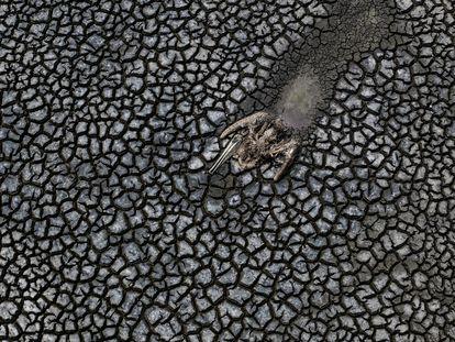 Los restos de un pelícano que se arrastró hasta morir en el lodo del medio de la laguna Farallón en el municipio de Actopan, Veracruz.