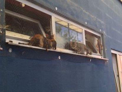 Algunos ejemplares se pasean por la ventana del centro.