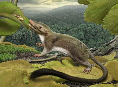 Ilustración del hipotético ancestro de los mamíferos placentarios de hace unos 65 millones de años.