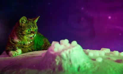 La gata Lil Bub en un fotograma de la película consagrada a sus peripecias.