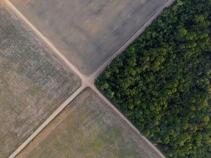 Vista de un trozo de selva amazónica junto a campos de soja, en el estado de Pará (Brasil), en noviembre de 2019.