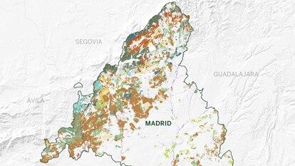Los bosques de Madrid: desde el pinar de alta montaña a la dehesa mediterránea sin salir de la comunidad