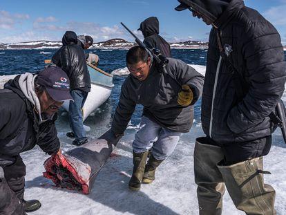 La carne de ballena se divide y parte se comparte con los ancianos de la ciudad en las afueras de Cape Dorset, Canadá.