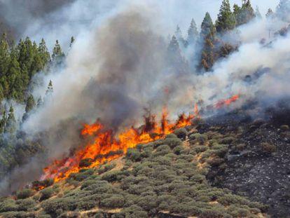 Vista del incendio declarado este sábado en la zona de Artenara, en el oeste de la isla de Gran Canaria.
