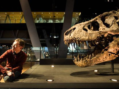 El paleóntologo Anne Schulp, junto al fósil de tiranosaurio en el Cosmocaixa de Barcelona.