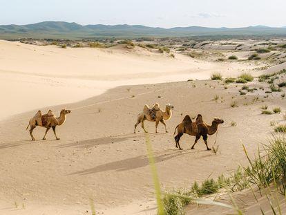 La mayor parte de Mongolia se caracteriza por un clima semiárido similar en precipitaciones al de la España mediterránea.