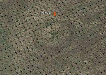 Foto aérea de un enterramiento neolítico de Roza da Lama (ayuntamiento de Abadín), que ha sido arado para una plantación.
