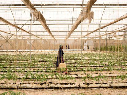 La agricultora Fone Coulibaly, en un invernadero de Katibougou, Malí.