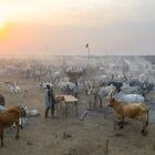 TEREKEKA, SOUTH SUDAN - FEBRUARY 13: Aerial view of long horns cows in a Mundari tribe cattle camp, Central Equatoria, Terekeka, South Sudan on February 13, 2020 in Terekeka, South Sudan. (Photo by Eric Lafforgue/Art in All of Us/Corbis via Getty Images)