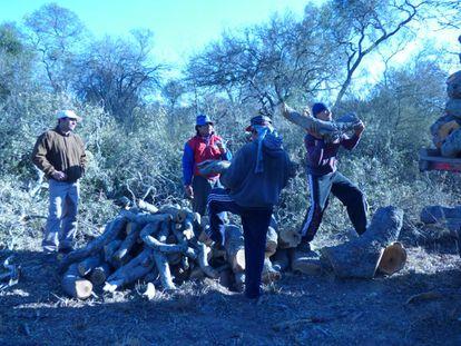 Sacheros cargan troncos recién cortados en la cuenca forestal de Monte Quemado.