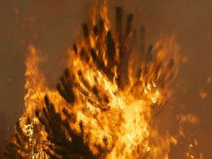 Incendio en el municipio de Baltar, Ourense. 2011,
