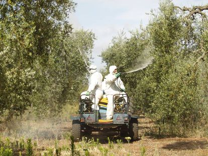 Varios operarios fumigan con abono líquido una finca de olivar en Pilas (Sevilla).