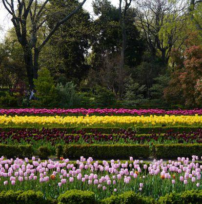 Tulipanes en el Real Jardín Botánico de Madrid.  