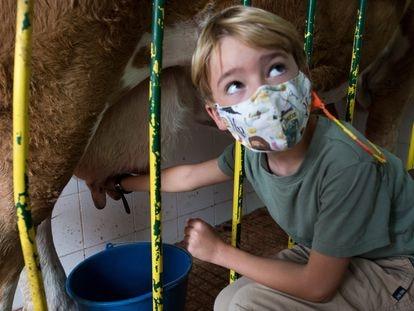 Salvador Mengual, de siete años, ordeña una vaca durante su visita a la granja El Palomar en Chapinería.
