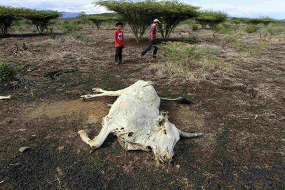 Un par de niños observan una vaca muerta por la sequía en Nicaragua.