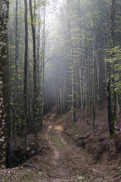El hayedo de Zilbeti, al norte de Navarra, donde hace ocho años una iniciativa ciudadano-artística salvó el bosque de una tala masiva.