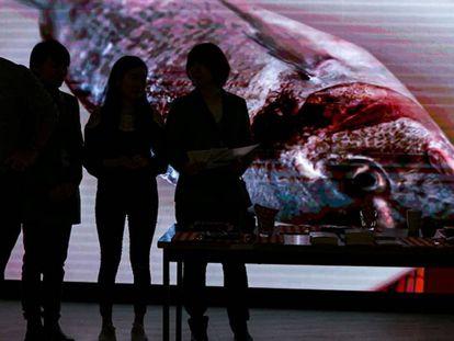 Imagen de un pez en la 72ª asamblea de la Organización Mundial de la Salud.