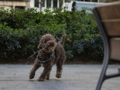 """""""Se me cruzó por la cabeza también un hombre que cada mañana me cruzo en la avenida Roma mientras paseo con mi perro Camilo""""."""