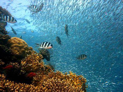 Bandadas de peces en un arrecife de coral.