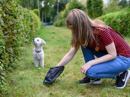 Seleccionamos las mejores bolsas para recoger los excrementos de perro y con miles de valoraciones en Amazon.