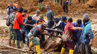 Soldados y voluntarios intentan liberar del lodo a una vaca tras el corrimiento de tierras en la isla indonesia de Java.