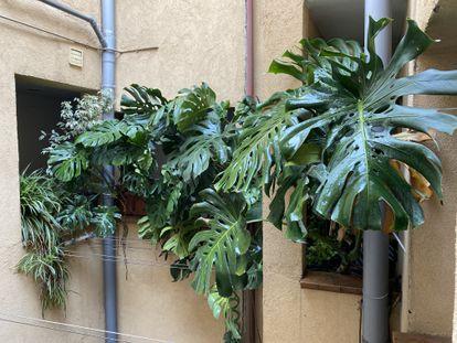 Las plantas de Rubén Alves, en el barrio de Malasaña. R.A