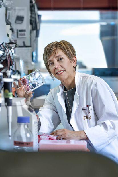 Marisol Soengas, fotografiada en las dependencias del CNIO, donde lidera el grupo de investigación de melanoma.