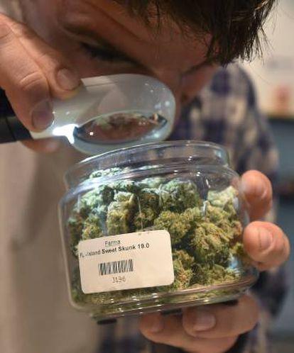 Un hombre inspecciona marihuana en un dispensario de este producto en Portland, Oregón.