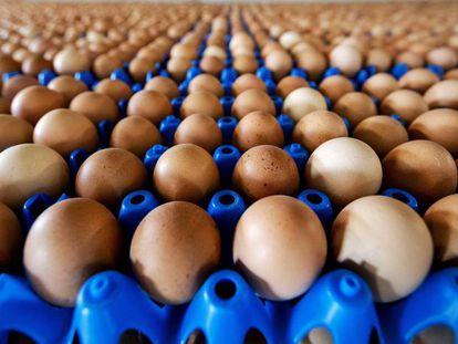 Vista de la producción de huevos de una granja en Putten (Holanda),