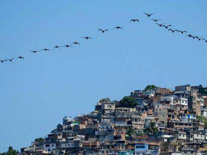 una bandada de pájaros sobrevuela una favela en la ciudad de Río de Janeiro, Brasil, el 10 de abril de 2015.