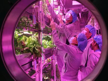 Los voluntarios trabajan en la huerta del laboratorio.